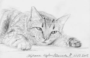 sad cat by Sillageuse