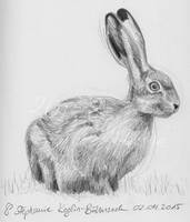 rabbit/hare by Sillageuse