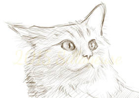 cat sketch (digital) by Sillageuse
