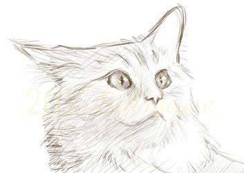 cat sketch (digital) by Sillageuse
