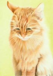 Commission: Cat (color pencils) by Sillageuse