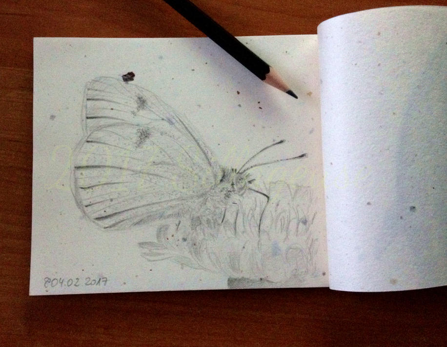 2017-02-04 Canary Islands Large White by Sillageuse