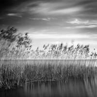 Breeze by laurentdudot
