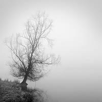 Foggy 4 by laurentdudot
