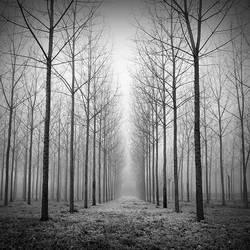 Foggy 5 by laurentdudot