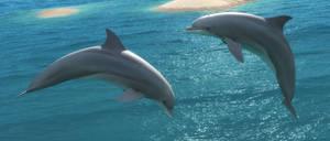 Dolphin Leap by DrowElfMorwen