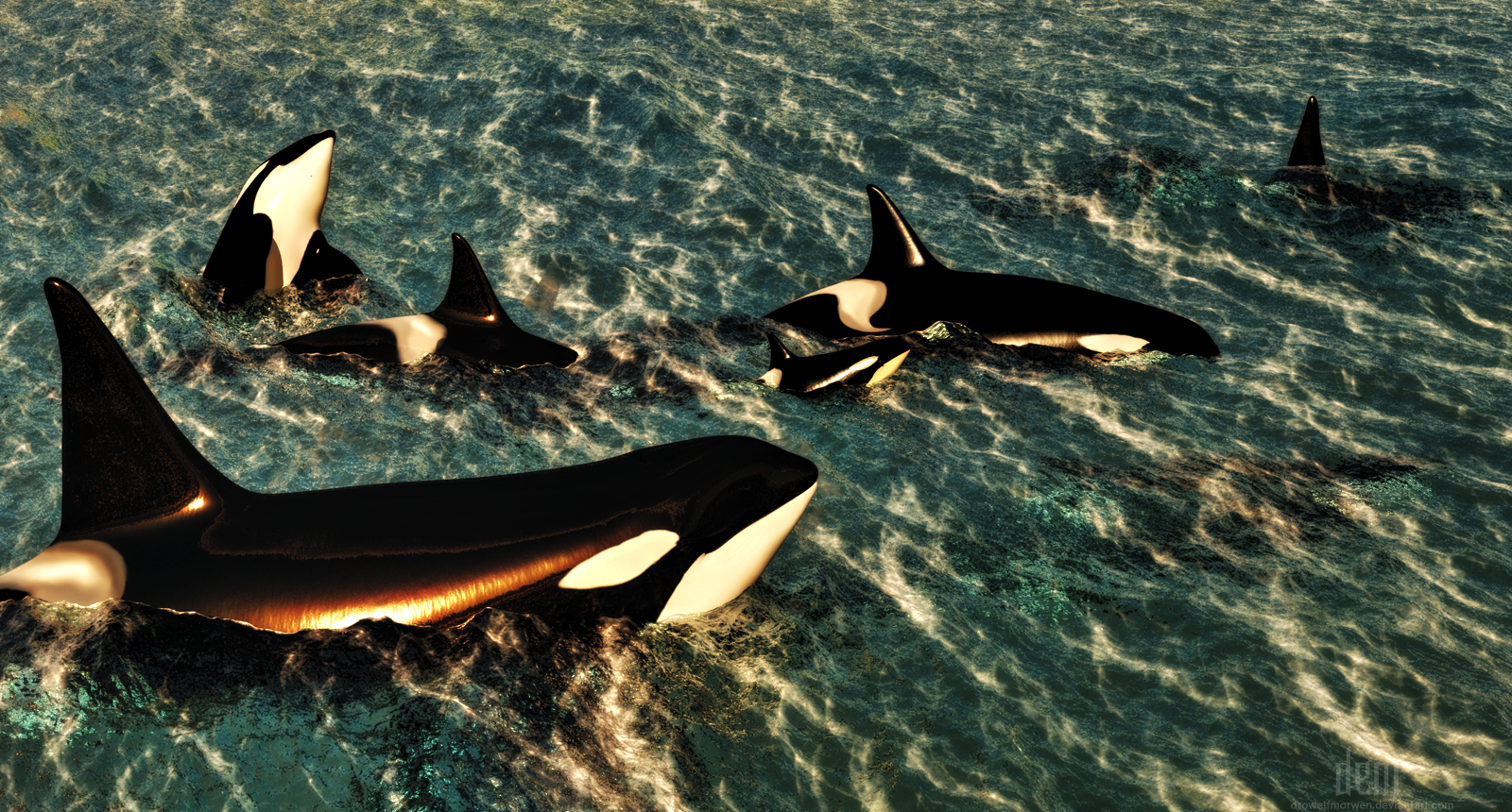 Orca :: Passing By [Vers 2] by DrowElfMorwen