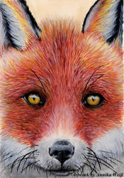Fox by JustABeautifulDream