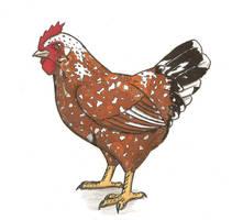 F is for Flower hen by herofan135