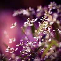 purple by BlueFish24