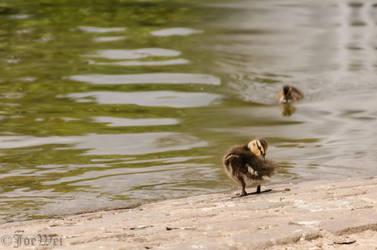 Clean up little duck by JoeWei