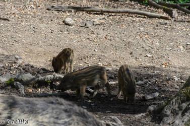 Three little piglets by JoeWei