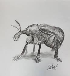 Fey Beetle by Carl-McIntyre