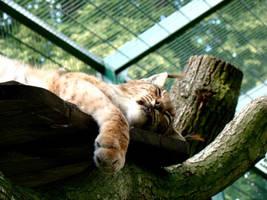Sleep, sweety. by Bubel-Coyot