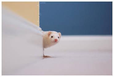 Peek-a-boo by Esmaice