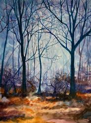 Forest Walk by SChappell