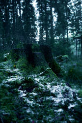 First frost in fairyland 2 by Dragoroth-stock