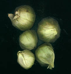 tomatillos by kparks