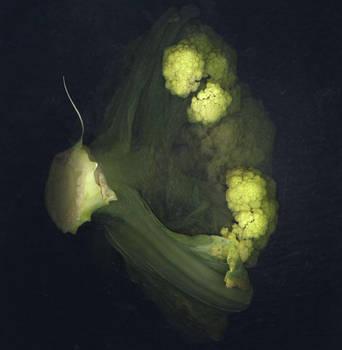 broccoflower by kparks