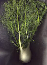 Fennel No.1 by kparks