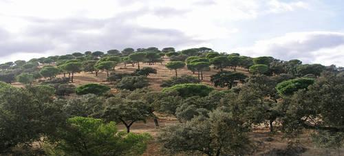 Landscape Spain 073 by kparks