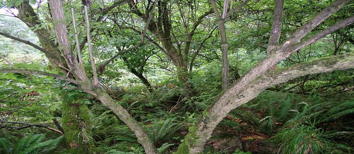 Landscape Oregon 008 by kparks
