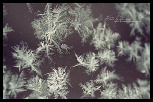 Ice flowers by yenna-photo