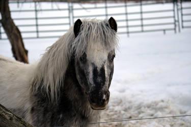 Miniature Horse by consideritfox