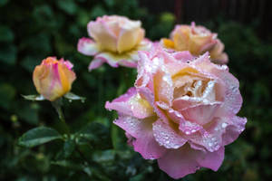 After the rain by alex1nax