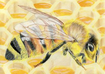 Honeybee by Aishila