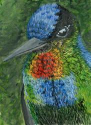Hummingbird by Aishila