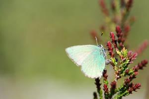 Green wings by Truesome