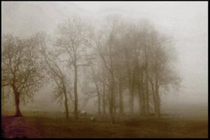 Misty Meadow by KarinClaessonArt