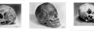 Skull study series by KarinClaessonArt