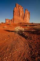 Desert Garden by davidrichterphoto