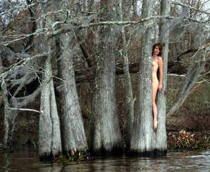 Bayou Trees by DaveL51