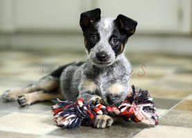 meet dog by ShannonReiswig