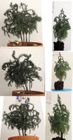 Tree - Small twisty potted pine by Archangelical-Stock