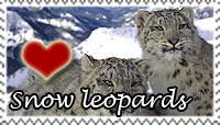 Snow Leopards Love Stamp by PetLovers