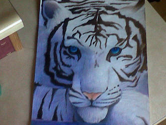 Dhiren Tigers Curse by ZutaraAllways