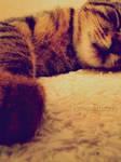 Ups. I fell asleep again. by HammettLady