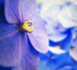 Blue one by HammettLady
