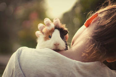Guinea Piggy by HammettLady