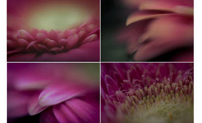 Pretty in pink by HammettLady