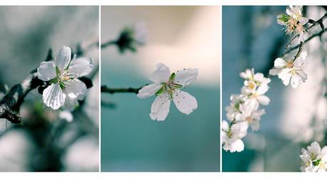 Spring greetings by HammettLady