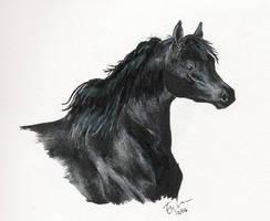 Black Beauty by emele-the-strange