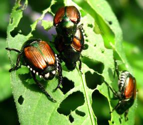 Beetle Bugs by mirmi4a