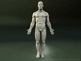Ecorche Front View by EtherealProject