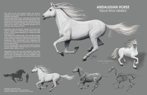 Andalusian Horse Comp by EtherealProject
