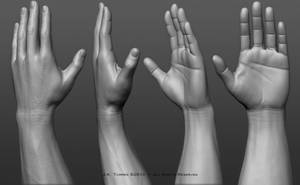 Hands: Anatomy sculpting exercise. by EtherealProject
